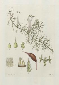 Palmstruch #276