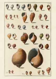 Seashells #044