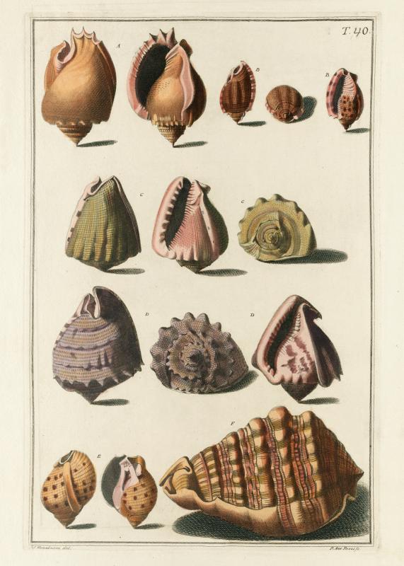 Seashells #050