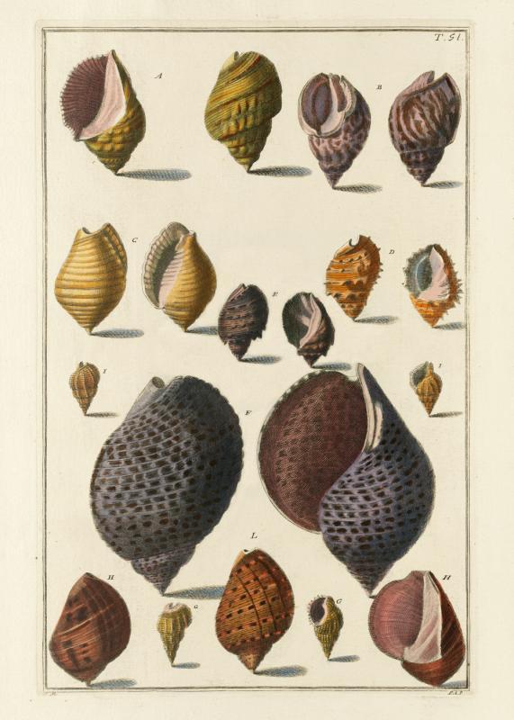 Seashells #051
