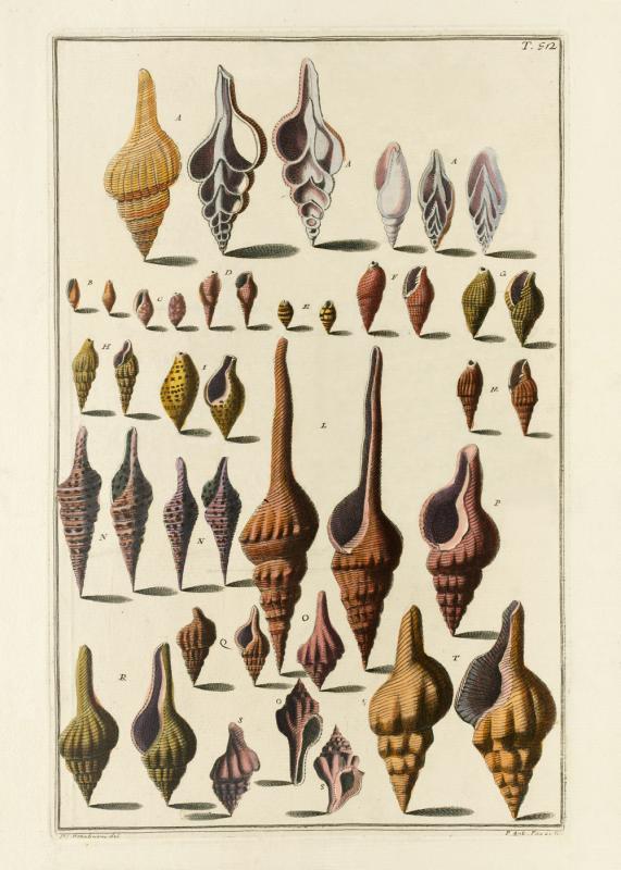 Seashells #052