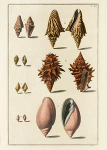 Seashells #055
