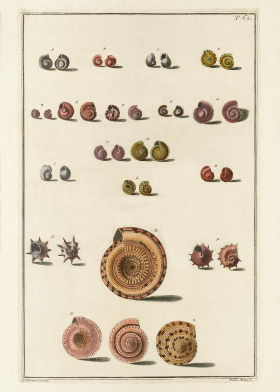 Seashells #065