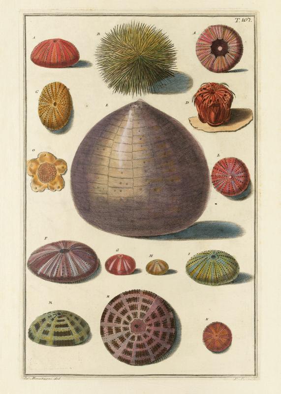 Seashells #107