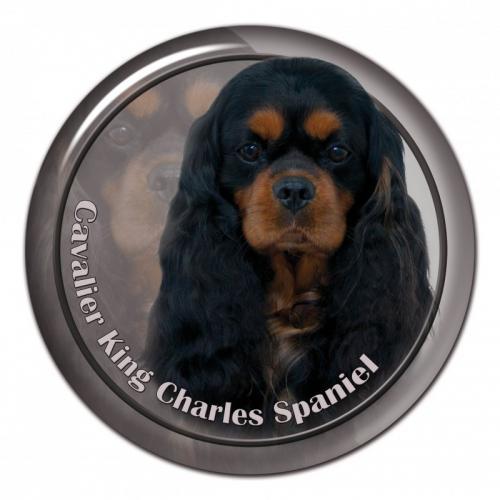 Dekaler med Cavalier King Charles Spaniel