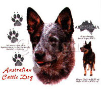 T-shirt med Australian Cattle Dog
