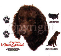 T-shirt med American Water Spaniel