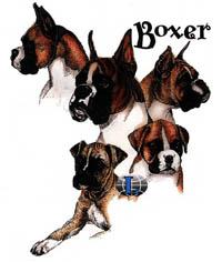 T-shirt med Boxer