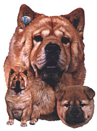 T-shirt med Chow Chow