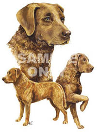 T-shirt med Chesapeake Bay Retriever
