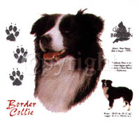 T-shirt med Border Collie