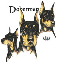 T-shirt med Dobermann