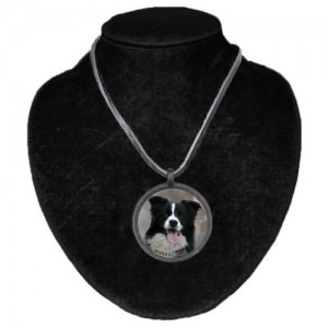 Halsband med Border Collie