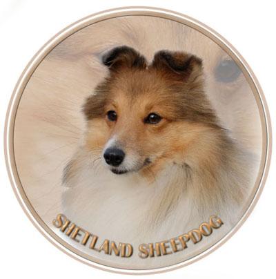 Dekal med Shetland Sheepdog