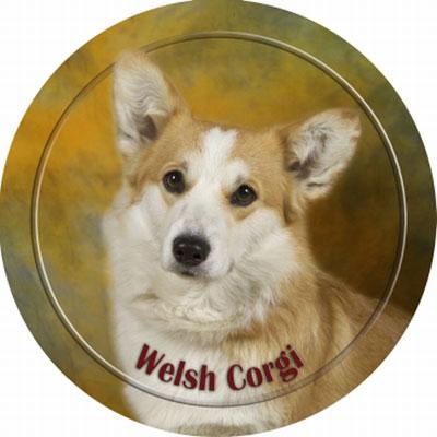Dekal med Welsh Corgi