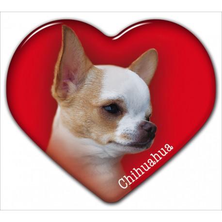 Dekal med Chihuahua Korthårig