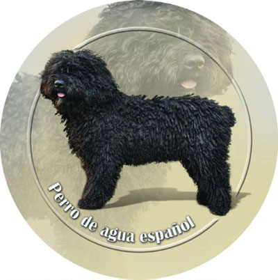 Dekaler med Perro de Agua Espanol