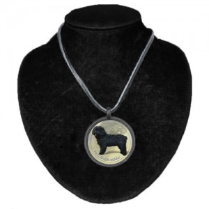 Halsband med Perro de Agua Espanol
