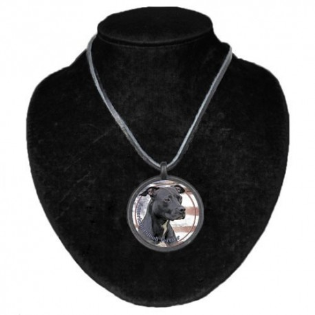 Halsband med American Pitbullterrier