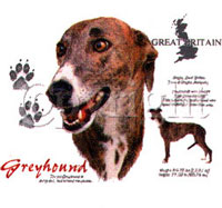T-shirt med Greyhound