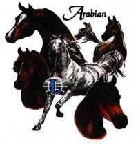 V-ringad t-shirt med Hästmotiv