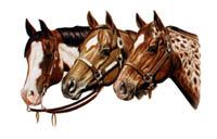 Luvtröja med hästmotiv
