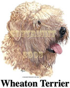 T-shirt med Irish Softcoated Wheaten Terrier