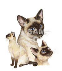 Figursydd T-shirt med kattmotiv