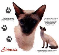 T-shirt med kattmotiv