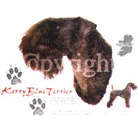 T-shirt med Kerry Blue Terrier