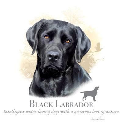 T-shirt med Labrador