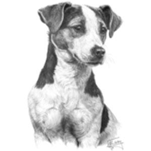 T-shirt med Parson Russell Terrier
