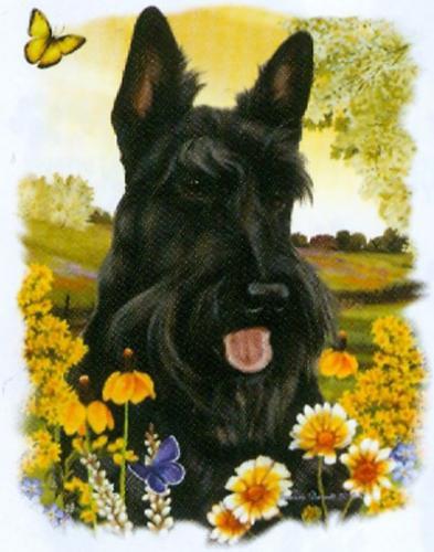 Tygkasse med Skotsk Terrier