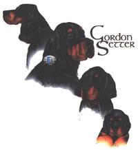 T-shirt med Gordonsetter