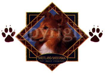 Musmatta med Shetland Sheepdog