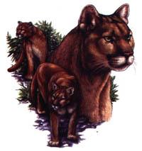 Luvtröja med Puma