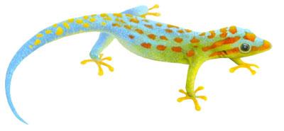 T-shirt med Geckoödla