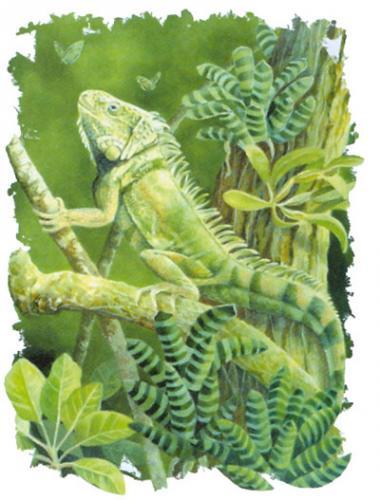 T-shirt med Grön Leguan