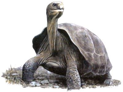 T-shirt med Sköldpadda