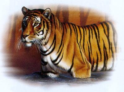 T-shirt med Tiger