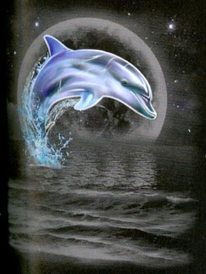T-shirt med Delfiner