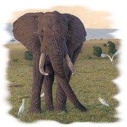 T-shirt i barnstorlek med Elefant