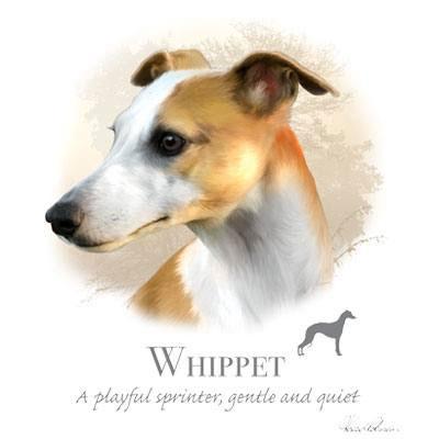 T-shirt med Whippet