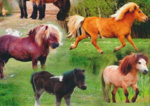 T2511 Jersey Fabric Ponies