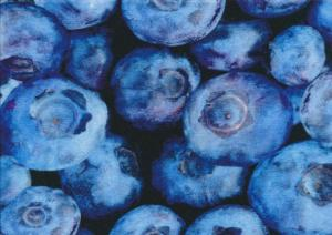 T4052 Jersey Fabric Blueberry