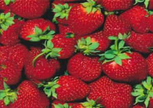 T4276 Jersey Fabric Strawberry