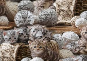 T5362 Jersey Cats with yarn