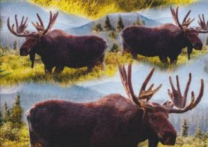 T5591 Jersey Fabric Moose
