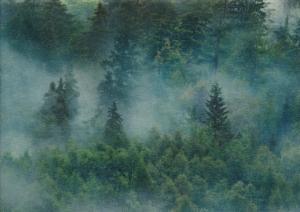 T6133 Sweatshirt Fabric Forest