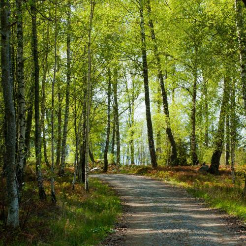Vandringsleden på Adelsö går genom vacker skogsmiljö